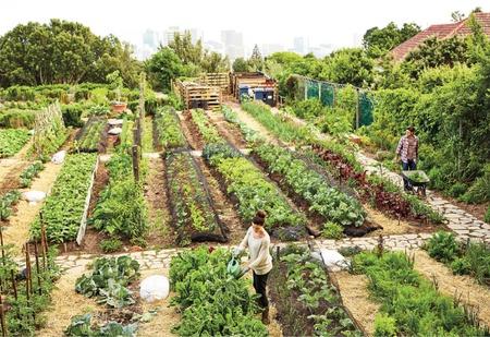 Studierende im Gemüsegarten